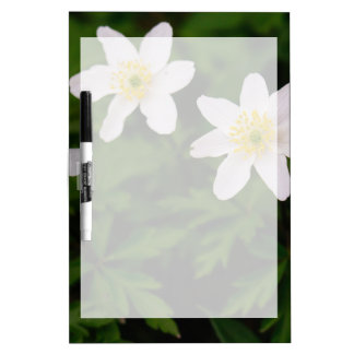 Wood Anemone White Flowers, Floral Photo Dry-Erase Whiteboards