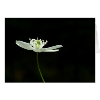 Wood Anenome Wildflower Greeting Card