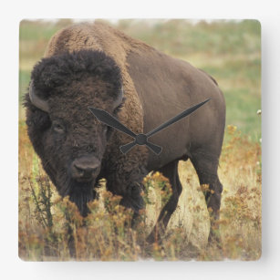 Wood Bison Wall Clock