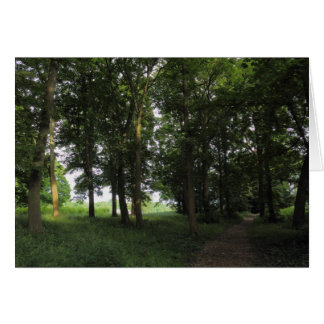 Wood, Bute Park Cardiff Greeting Card
