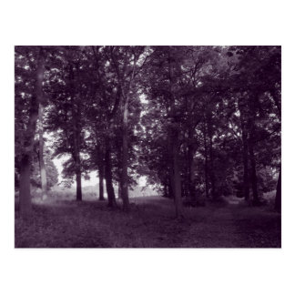 Wood, Bute Park Cardiff - Purple toned Postcard