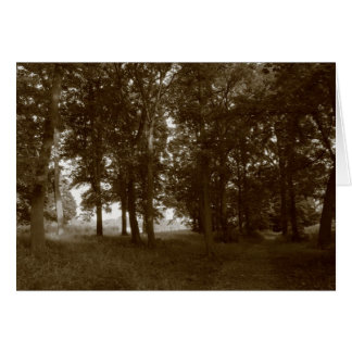 Wood, Bute Park Cardiff - Sepia toned Greeting Card