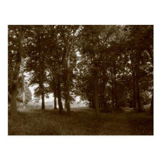 Wood, Bute Park Cardiff - Sepia toned Postcard