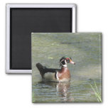 Wood Duck 2 Inch Square Magnet