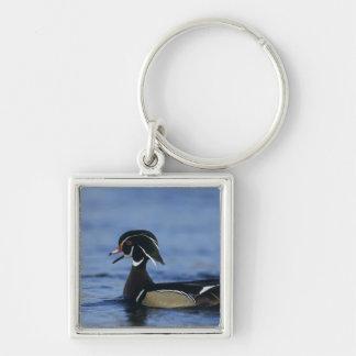 Wood Duck, Aix sponsa,male calling, New Keychain