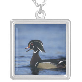 Wood Duck, Aix sponsa,male calling, New Silver Plated Necklace