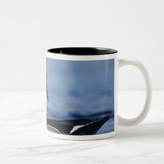 Wood Duck, Aix sponsa,male calling, New Two-Tone Coffee Mug