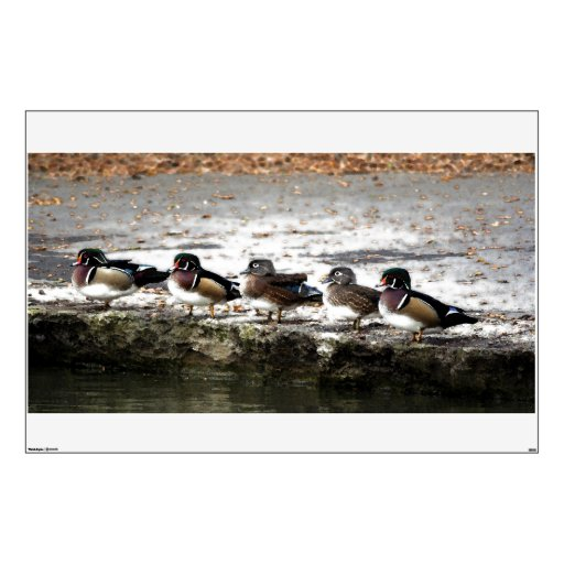 Wood Duck Birds Wall Decal