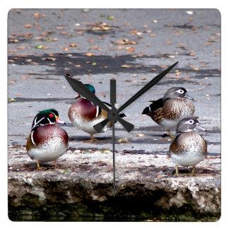 Wood Duck Birds Wildlife Animals Wall Clock
