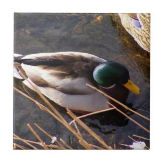 Wood Duck Ceramic Tile