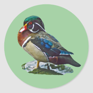Wood Duck Classic Round Sticker