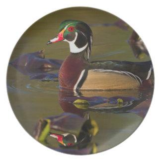 Wood Duck Drake 1 Melamine Plate