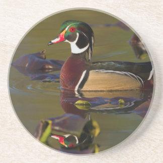 Wood Duck Drake 1 Sandstone Coaster