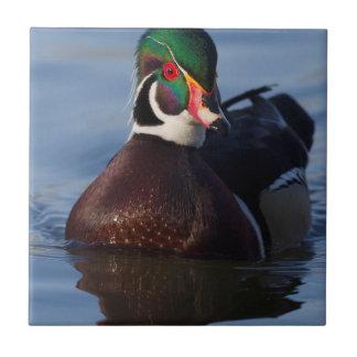 Wood Duck Drake 2 Tile