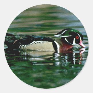 Wood Duck (Drake) Classic Round Sticker