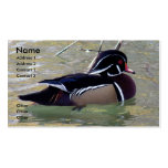 Wood Duck Drake Double-Sided Standard Business Cards (Pack Of 100)