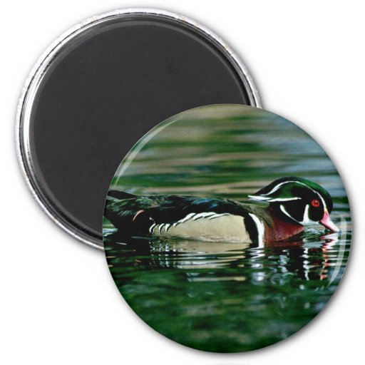 Wood Duck (Drake) Magnets