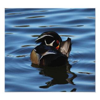 Wood Duck Drake Photo Print