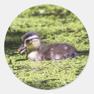 Wood Duck (Duckling) Classic Round Sticker