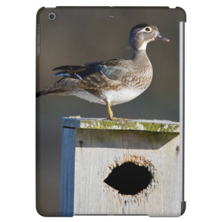Wood Duck female on nest box in wetland Cover For iPad Air