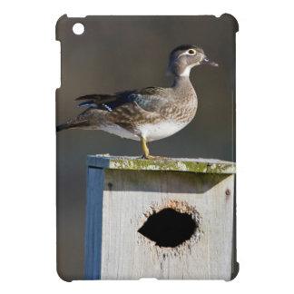 Wood Duck female on nest box in wetland iPad Mini Covers