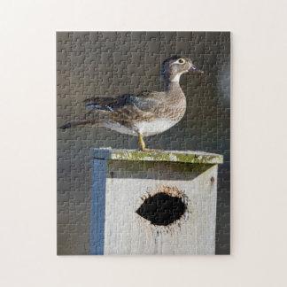 Wood Duck female on nest box in wetland Jigsaw Puzzle