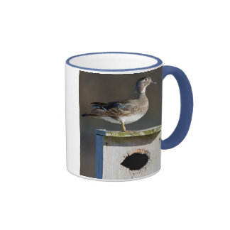 Wood Duck female on nest box in wetland Ringer Mug