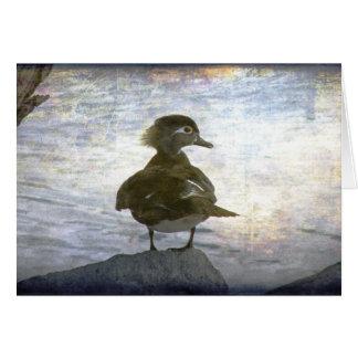 Wood Duck Hen Card