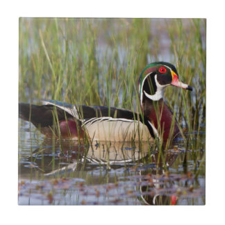 Wood Duck in wetland Ceramic Tile