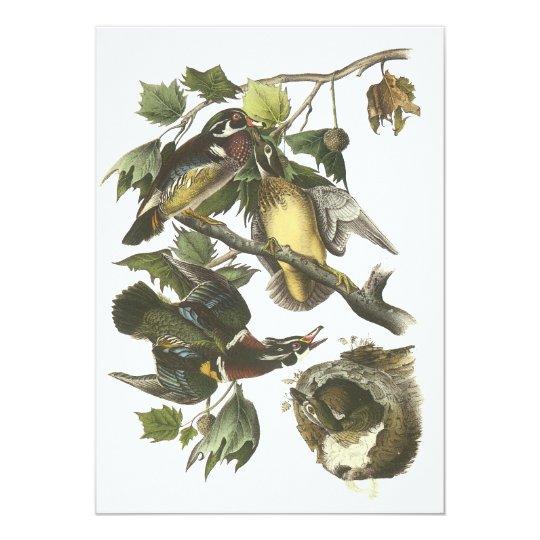 Wood Duck, John Audubon Card