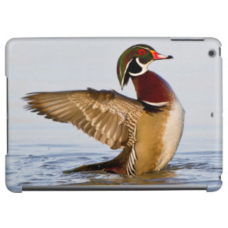 Wood Duck male flapping wings in wetland iPad Air Cover