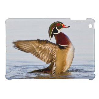 Wood Duck male flapping wings in wetland iPad Mini Covers