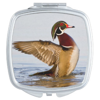 Wood Duck male flapping wings in wetland Makeup Mirror