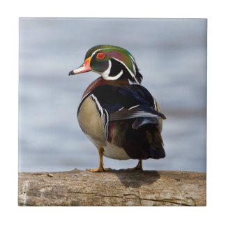 Wood Duck male on log in wetland Ceramic Tile