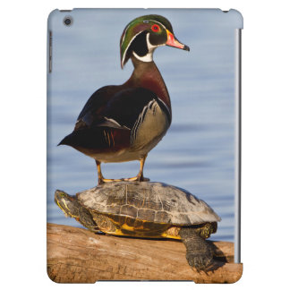 Wood Duck male standing on Red-eared Slider iPad Air Case