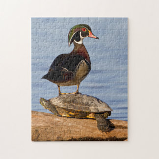Wood Duck male standing on Red-eared Slider Jigsaw Puzzle