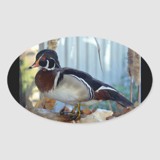 Wood Duck (Mississippi) Oval Sticker