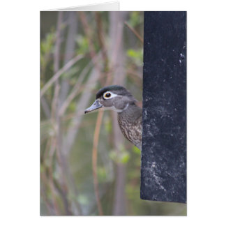 Wood Duck nesting box Greeting Card