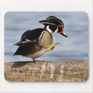 Wood Duck on log in wetland Mouse Pad