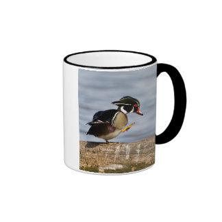 Wood Duck on log in wetland Ringer Mug