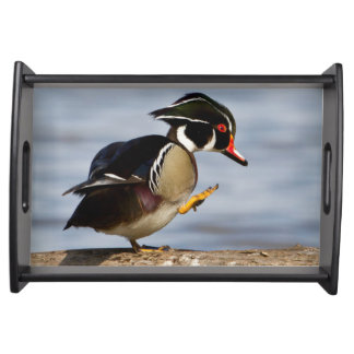 Wood Duck on log in wetland Serving Tray