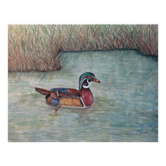 wood duck painting poster