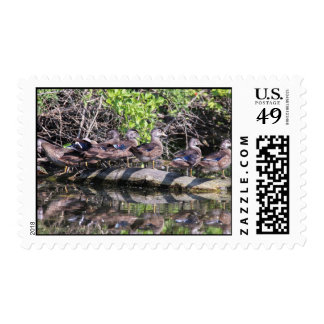 Wood Duck Postage Stamps