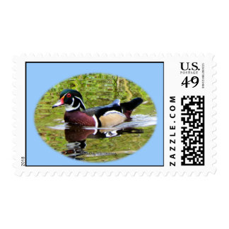 Wood Duck Postage Stamp