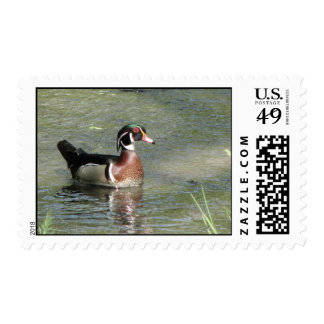Wood Duck Stamps
