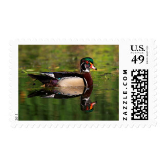 Wood Duck Postage