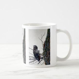 Wood duck preening mugs