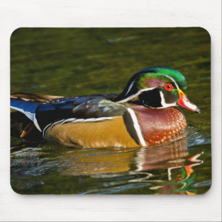 Wood Duck swimming, Crystal Springs Rhododendron Mouse Pad