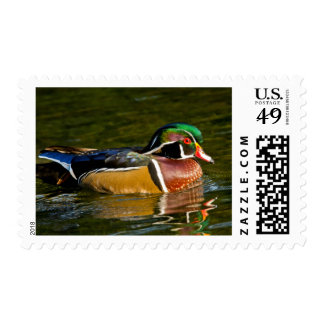 Wood Duck swimming, Crystal Springs Rhododendron Postage