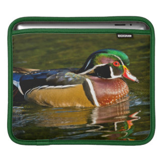 Wood Duck swimming, Crystal Springs Rhododendron Sleeve For iPads